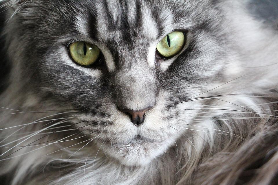 Consulenza per Problemi di Comportamento del Gatto a Milano, Monza Brianza, Lodi, Como e Lecco